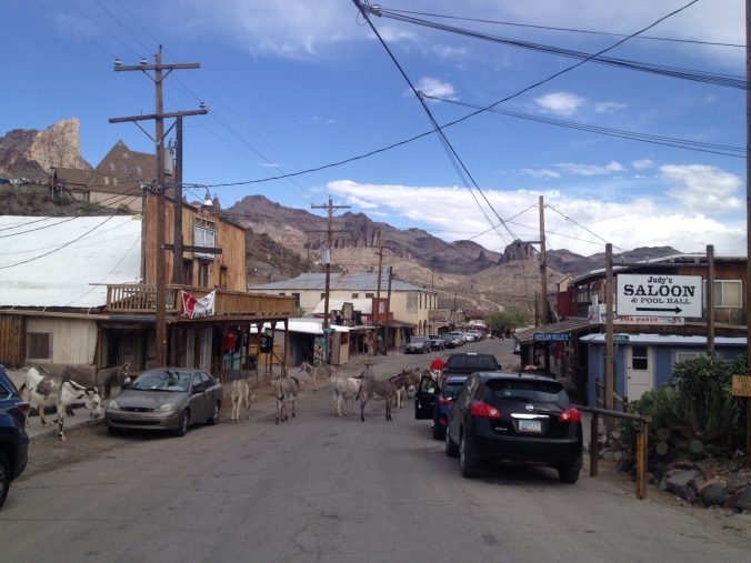 Burros in Oatman, Arizona