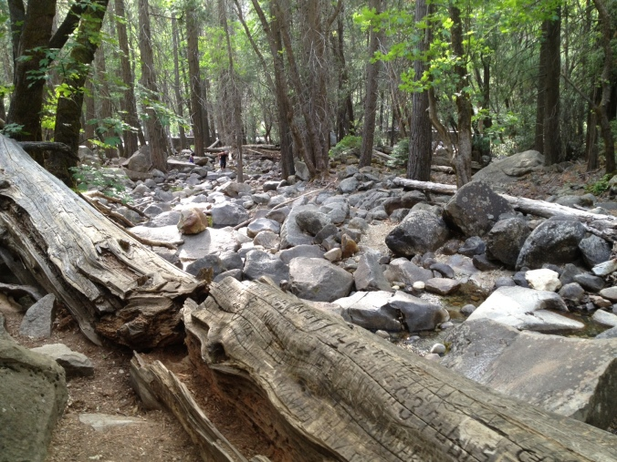A well-loved log just off the Bridalveil Fall Trail