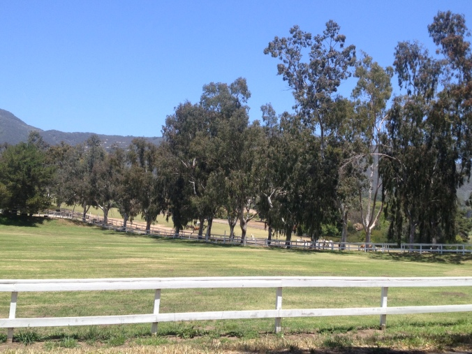 Round the bend to an unexpected horse farm on the backside of Carpinteria